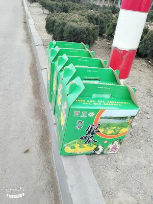 山东省潍坊市青州市火银瓜 种植 350.0g