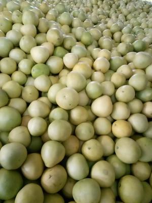 四川省成都市蒲江县蜜柚 2.5斤以上