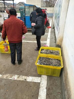 安徽省合肥市蜀山区野生金线水蛭