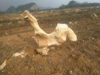 广西壮族自治区来宾市兴宾区木质工具