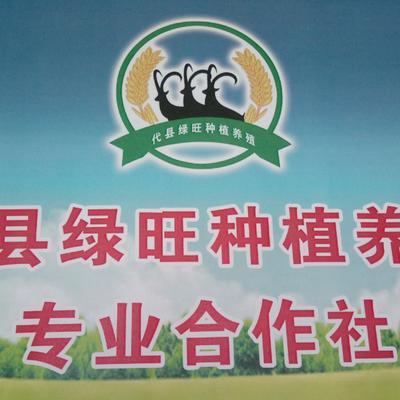 山西省忻州市代县黍子