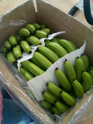 云南省西双版纳傣族自治州景洪市西双版纳香蕉 八成熟 70斤以上