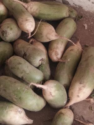 河南省开封市通许县青皮萝卜 2~2.5斤