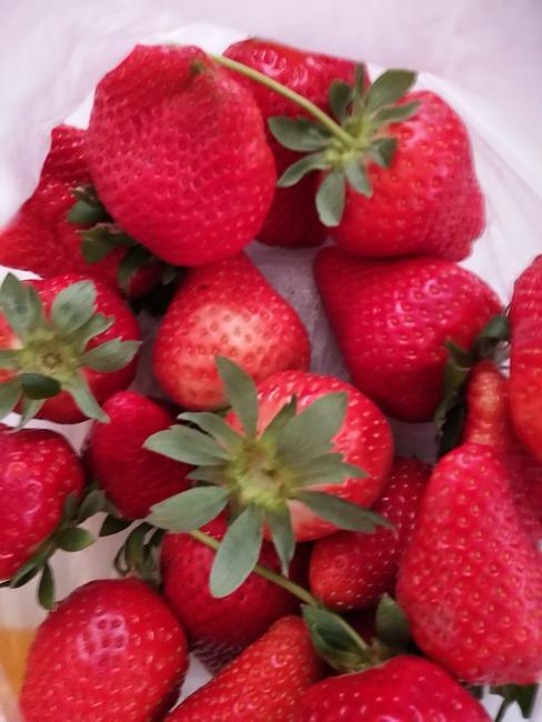 拉松6号草莓 20克以上