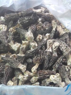 重庆九龙坡区干羊肚菌 袋装 1年