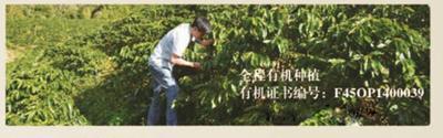 海南省海口市龙华区云南小粒咖啡豆