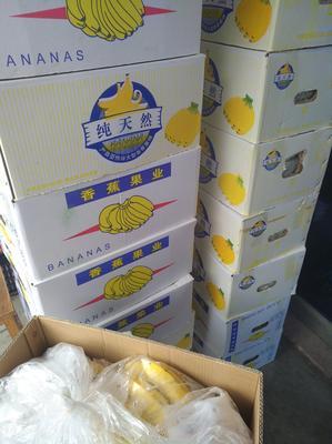 江苏省南通市海门市西贡蕉 八成熟 40斤以下