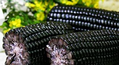 广东省广州市荔湾区玉米种子