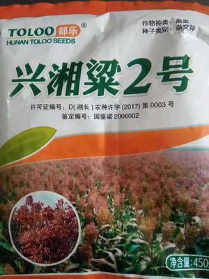 河北省沧州市沧县红樱子高粱种子 种子