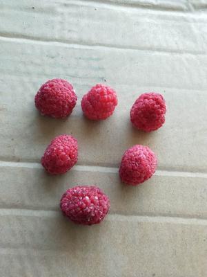 河北省唐山市滦南县红树莓 冻果