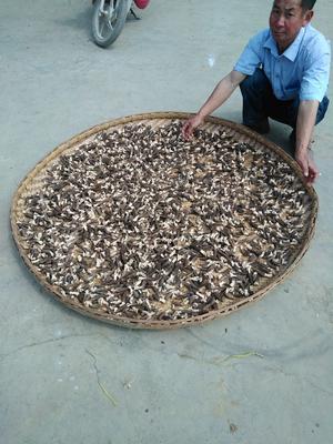 贵州省黔西南布依族苗族自治州兴仁县干羊肚菌 散装 1年以上