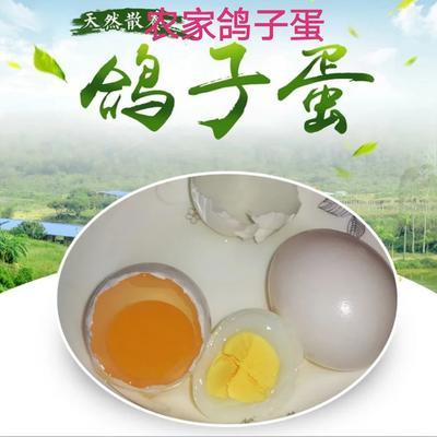 河南省驻马店市确山县银羽王鸽子蛋 食用 礼盒装