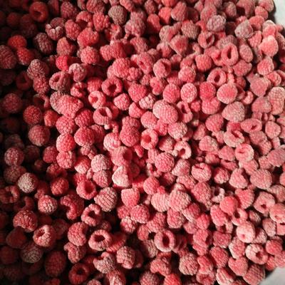 黑龙江省哈尔滨市尚志市红树莓费尔杜德 冻果