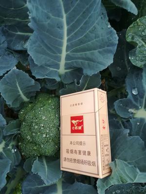 福建省漳州市龙海市炎秀西兰花 0.5~0.8斤 10cm以下