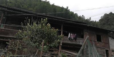 广西壮族自治区柳州市柳南区野生山茶油 5L