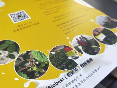 山东省潍坊市寿光市比利时熊蜂