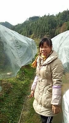 广西壮族自治区柳州市融安县油皮金桔 2-3cm 1两以下