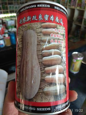 湖南省岳阳市华容县蜜本南瓜种子 97%