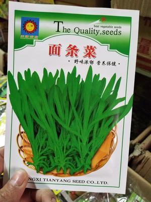 江苏省宿迁市沭阳县面条菜种子