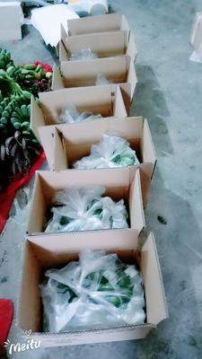 广西壮族自治区南宁市西乡塘区威廉斯香蕉 七成熟 40斤以下