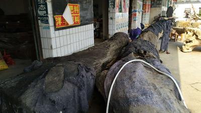 江西省宜春市袁州区沉木金丝楠