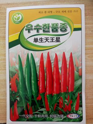 贵州省黔西南布依族苗族自治州兴义市朝天椒种子 85%以上 杂交种