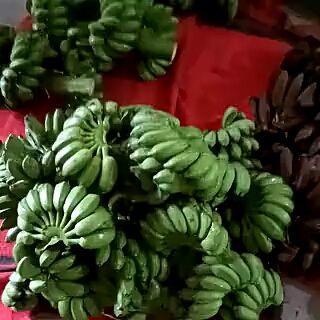 广西壮族自治区玉林市北流市小米蕉 七成熟 40 - 50斤