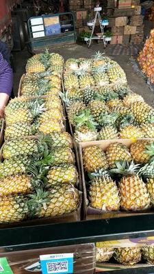 河北省邯郸市永年县海南菠萝 1.5 - 2斤