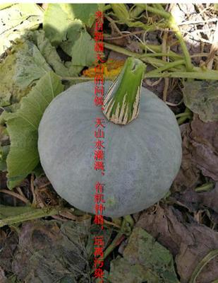 福建省泉州市安溪县板栗南瓜 2~4斤 扁圆形