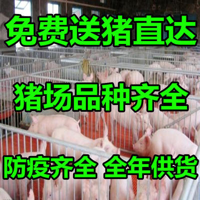 山东省临沂市沂水县杜洛克仔猪