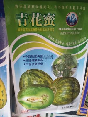 江苏省宿迁市沭阳县甜瓜种子