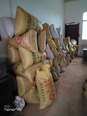江西省宜春市高安市大果油茶籽