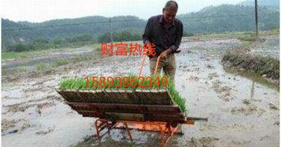 河南省新乡市红旗区插秧机