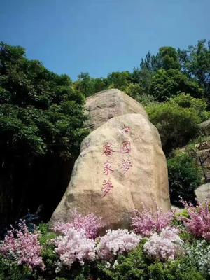 广东省梅州市大埔县紫红色百香果 60 - 70克