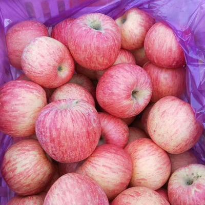 山东省临沂市沂水县红富士苹果 纸袋 条红 80mm以上