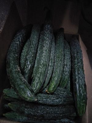 广东省湛江市雷州市带刺黄瓜 25~30cm 干花带刺