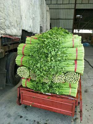 江苏省徐州市沛县平度芹菜 40~45cm 大棚种植 0.5斤以下