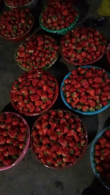 宁玉草莓 20克以上