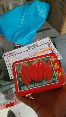 山东省济宁市金乡县朝天椒种子 97%以上 杂交种