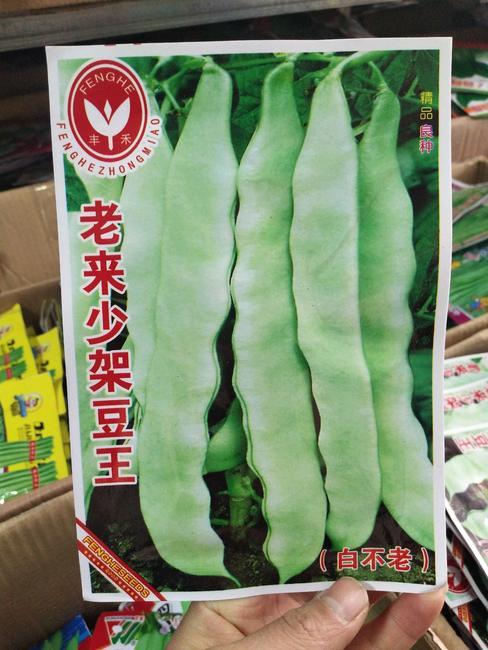 豆角种子 ≥95%