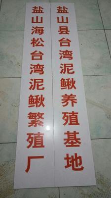 河北省沧州市盐山县台湾泥鳅 35尾/公斤 15cm以上 人工养殖