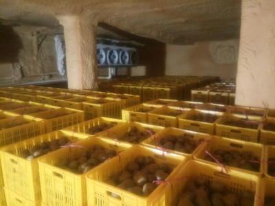 陕西省西安市周至县海沃德猕猴桃 120克以上