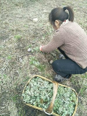 湖北省黄冈市罗田县软萩粑 1个月
