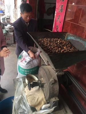 福建省三明市宁化县淮土山茶油 500ml