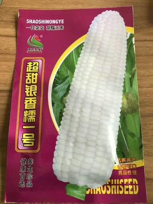江苏省宿迁市沭阳县玉米种子