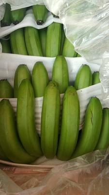云南省楚雄彝族自治州大姚县老挝香蕉 七成熟 40斤以下