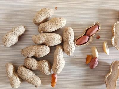 山东省临沂市临沭县花生果 散装 3-6个月
