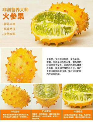 江西省上饶市鄱阳县火参果种子