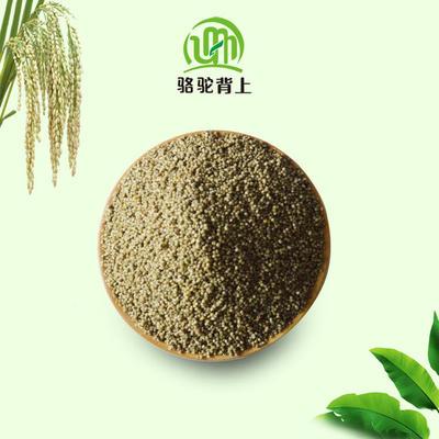 这是一张关于黑小米的产品图片