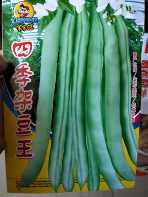 江苏省宿迁市沭阳县豆角种子 ≥98%